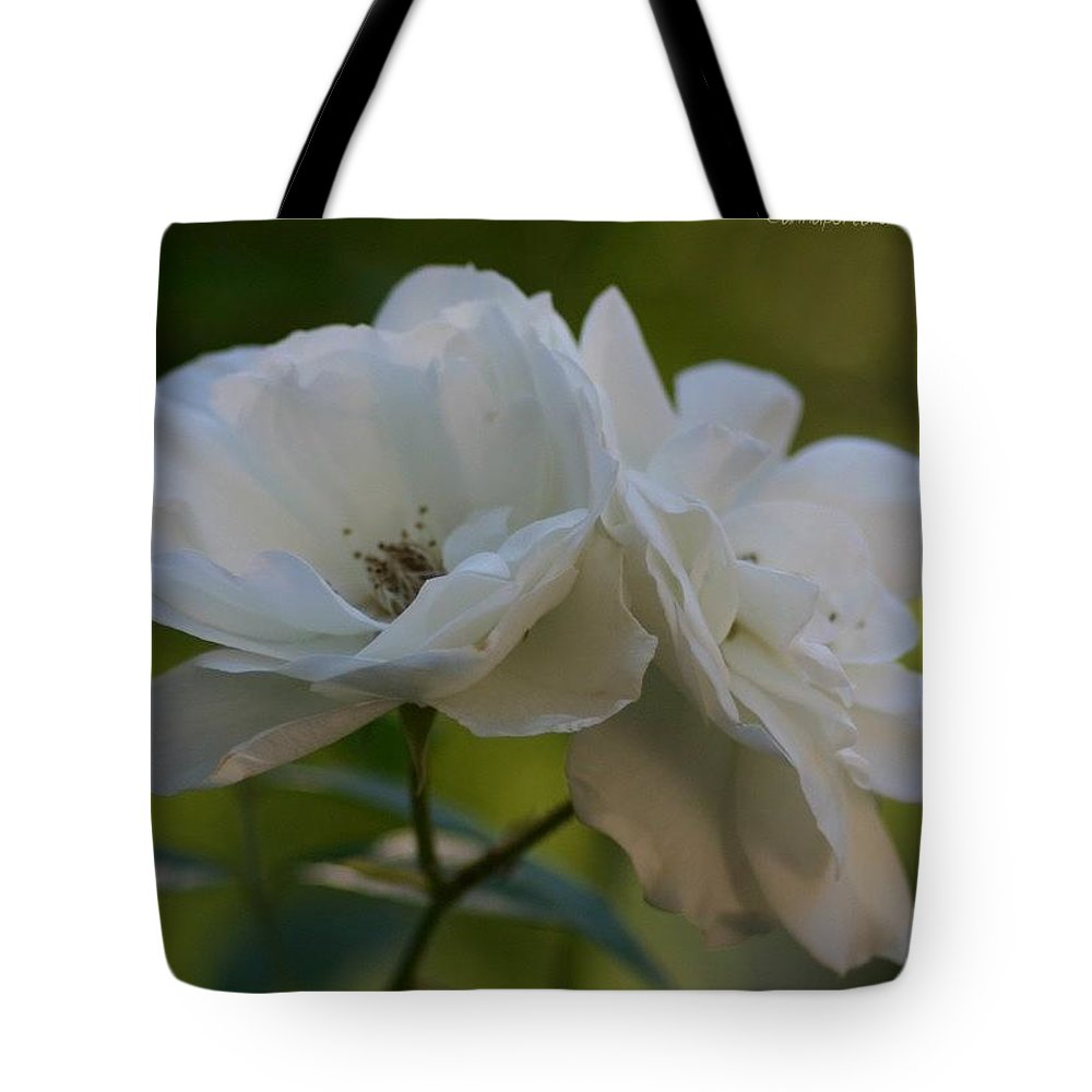 Flowers Tote Bag featuring the photograph Lean On Me White Roses in Anna's Gardens by Anna Porter
