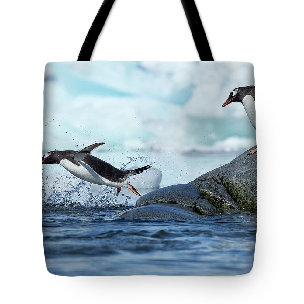 Water's Edge Tote Bag featuring the photograph Leaping Gentoo Penguins, Antarctica by Paul Souders