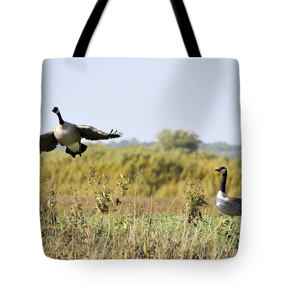 Goose Tote Bag featuring the photograph Left Behind by Bonfire Photography