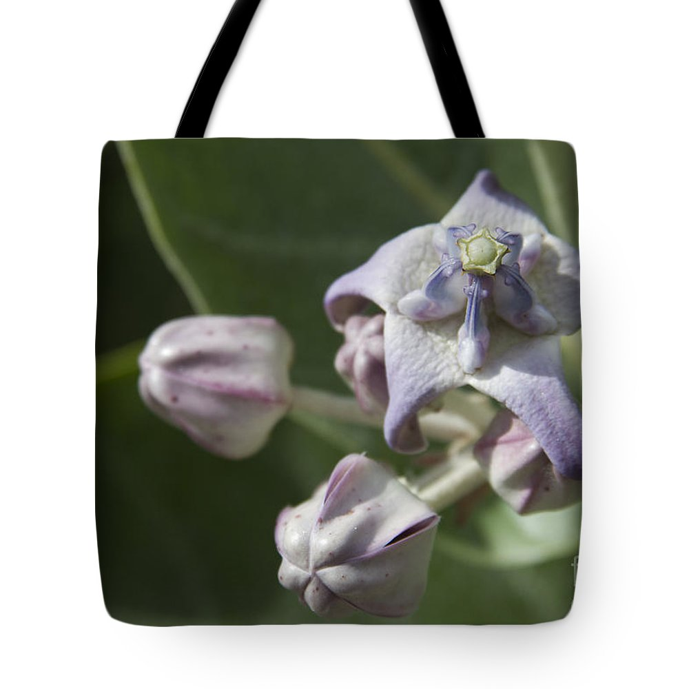 Aloha Tote Bag featuring the photograph Lei Pua Kalaunu - Crown Flower - Calotropis Gigantea - Asclepiadaceae by Sharon Mau