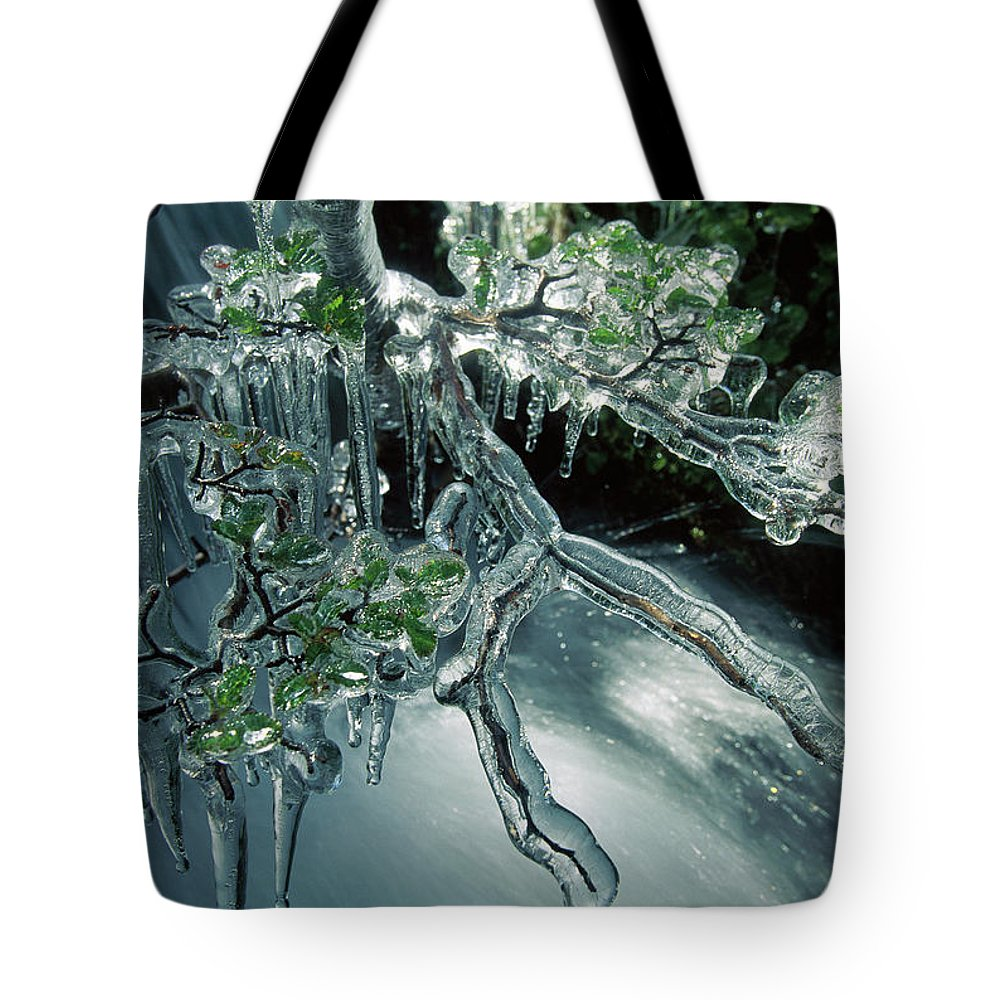 Chile Tote Bag featuring the photograph Lenga Beech Nothofagus Pumilio by Colin Monteath