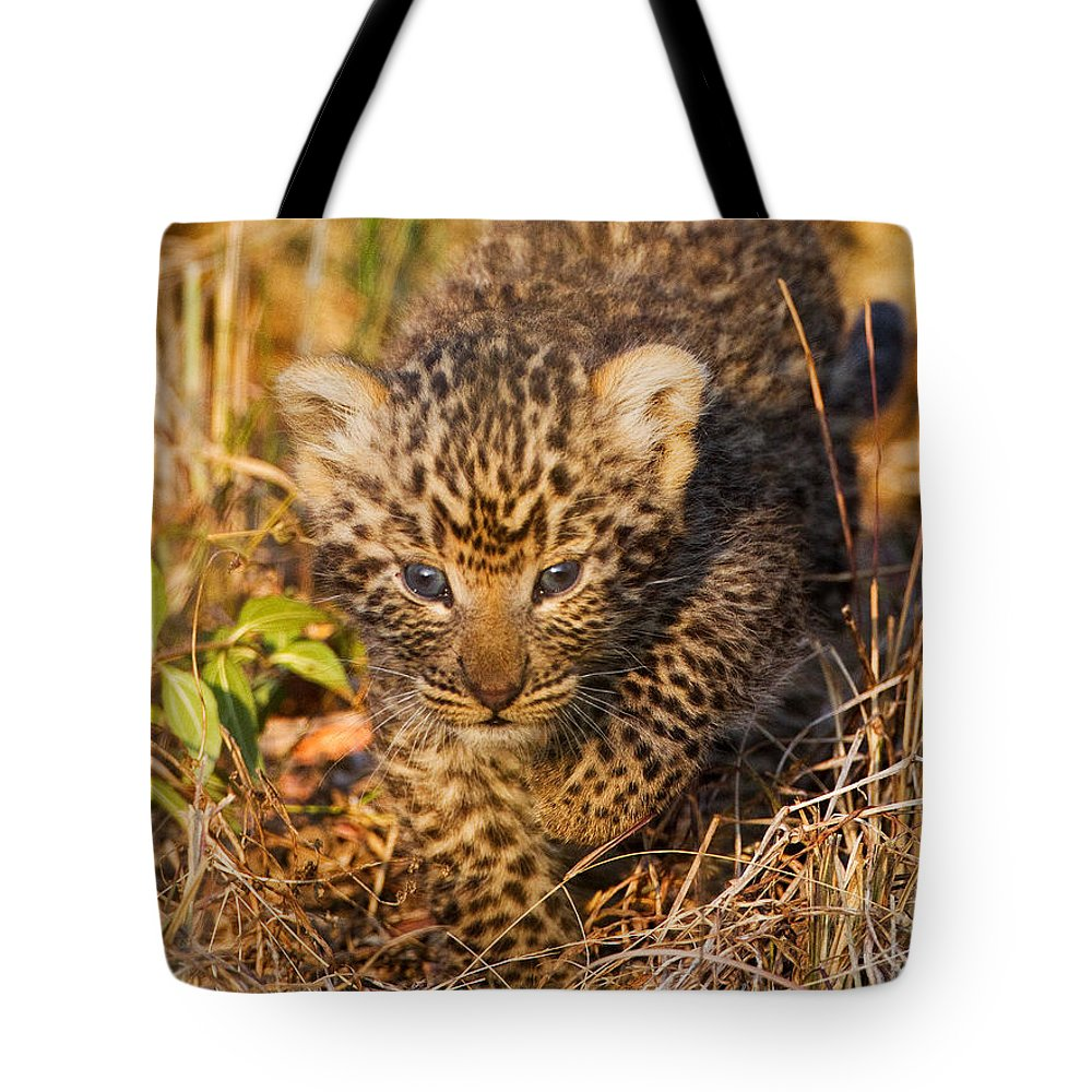 Leopard Tote Bag featuring the photograph Leopard Cub by Max Waugh