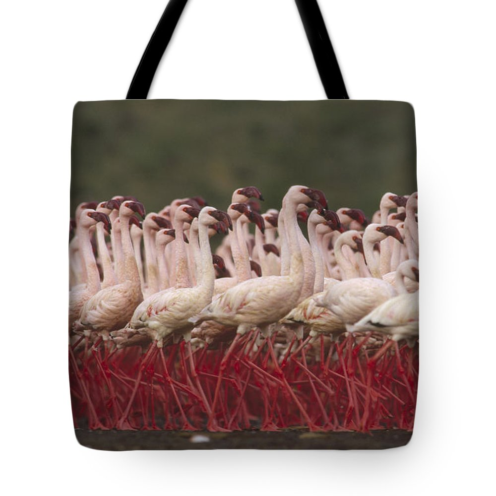 Mp Tote Bag featuring the photograph Lesser Flamingo Mass Courtship by Tim Fitzharris