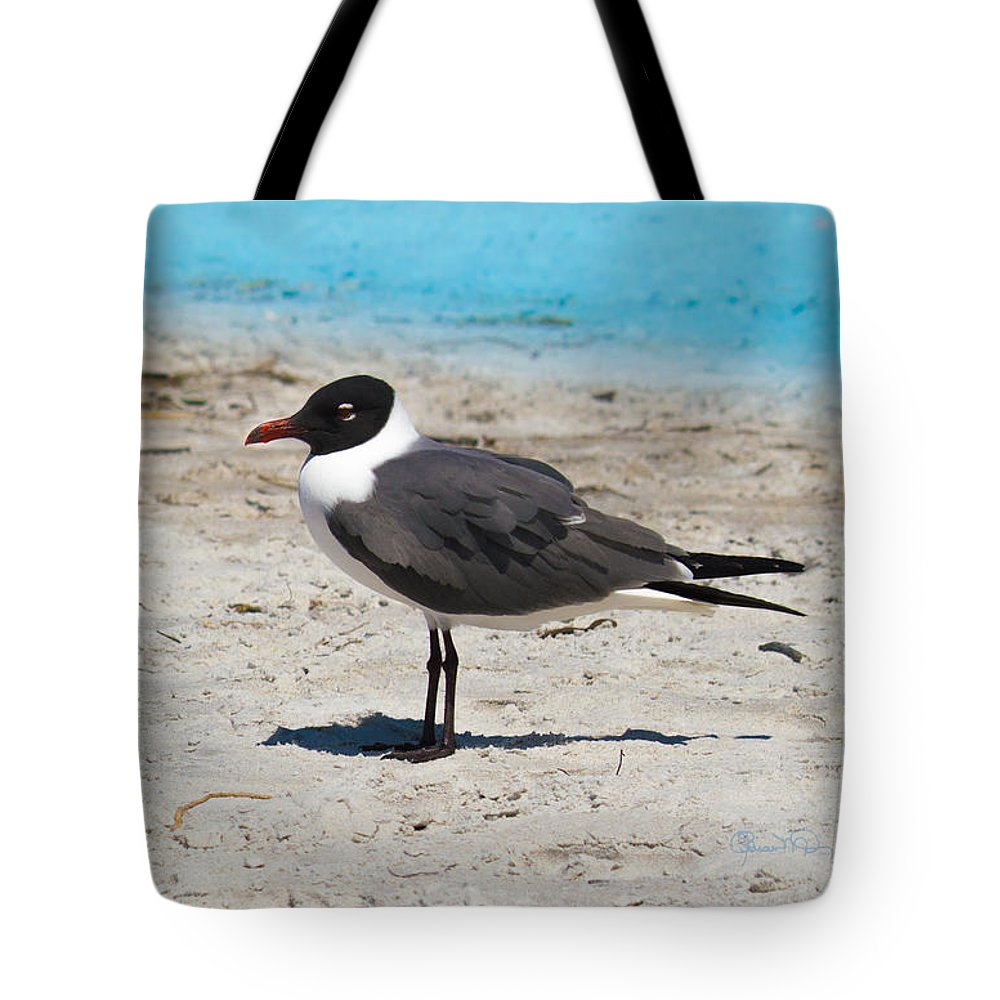 susan Molnar Tote Bag featuring the photograph Lido Gull by Susan Molnar