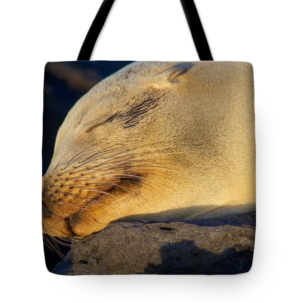 Sealion Tote Bag featuring the photograph Life In Paradise by Allan Morrison