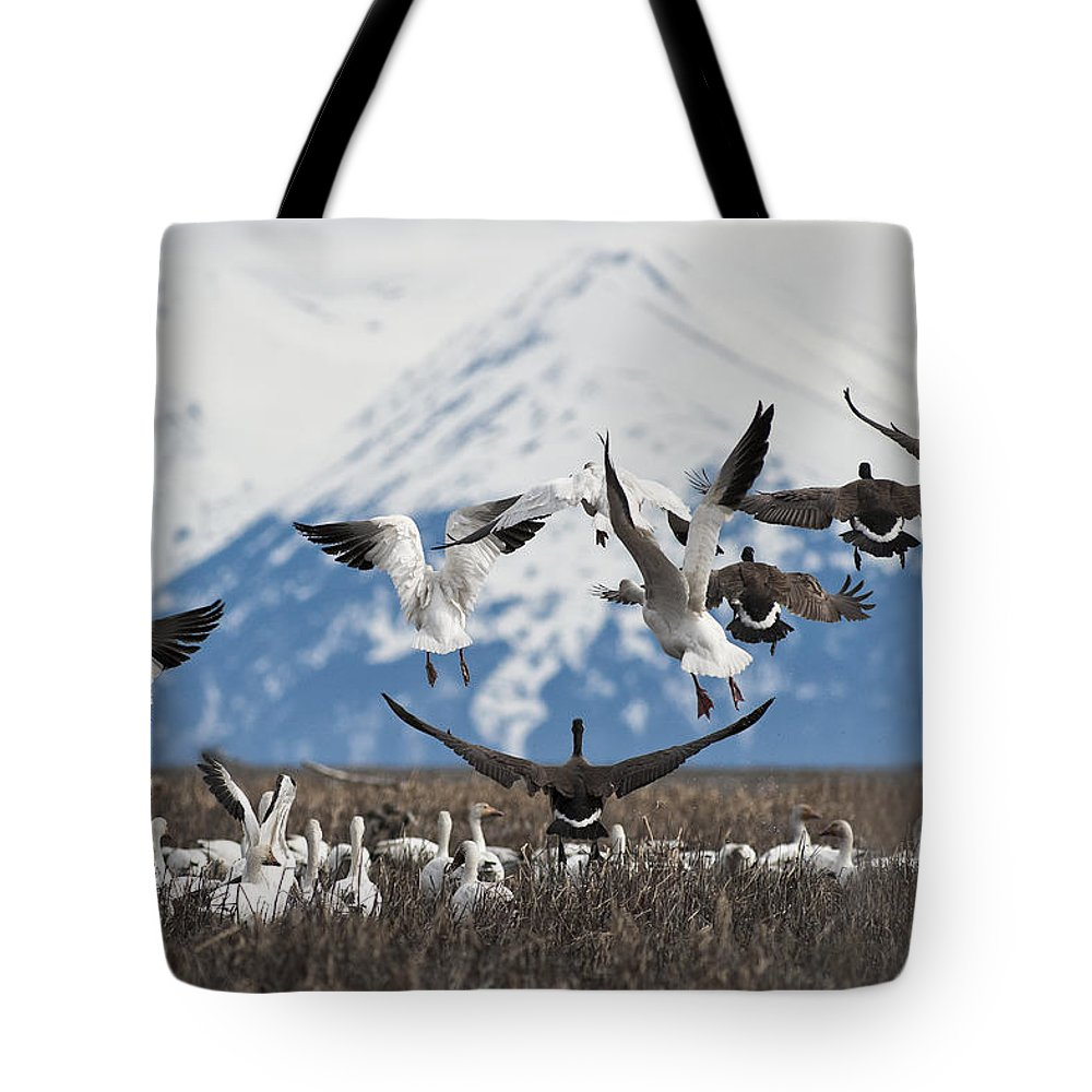 Branta Canadensis Tote Bag featuring the photograph Liftoff by Ted Raynor