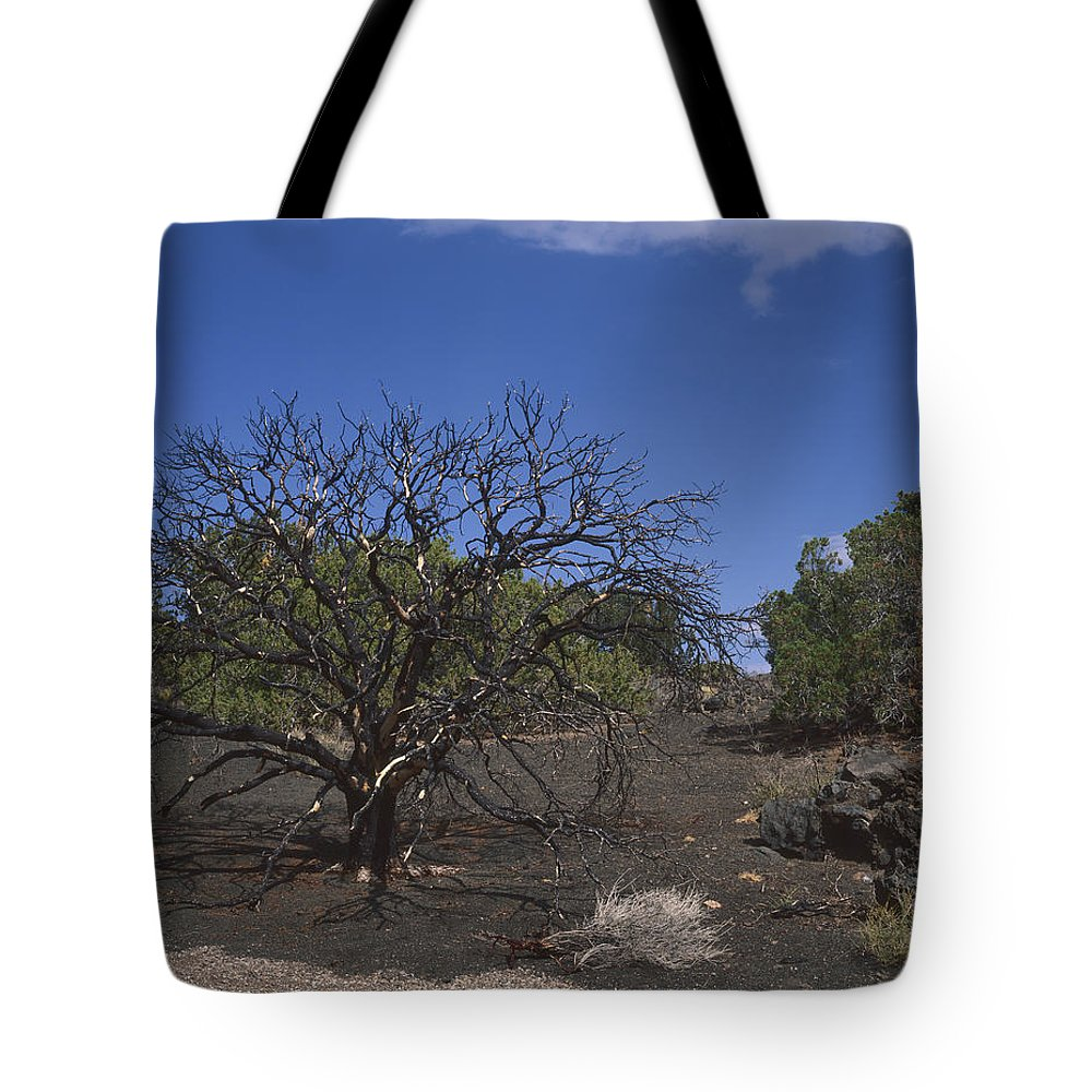 Nature Photography Tote Bag featuring the photograph Lightning Struck Tree by Tom Daniel