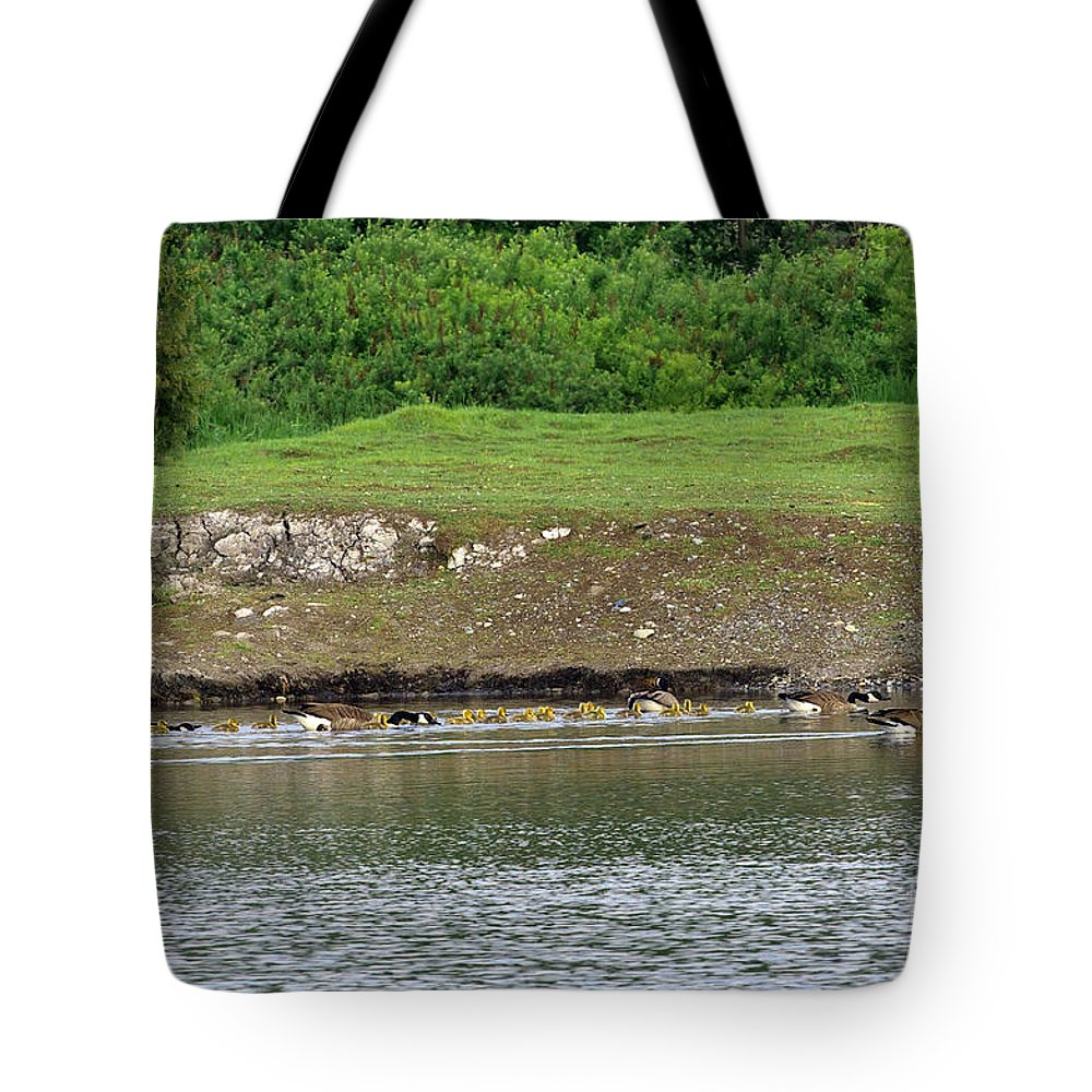 Canada Geese Tote Bag featuring the photograph Line Dance by Sharon Talson