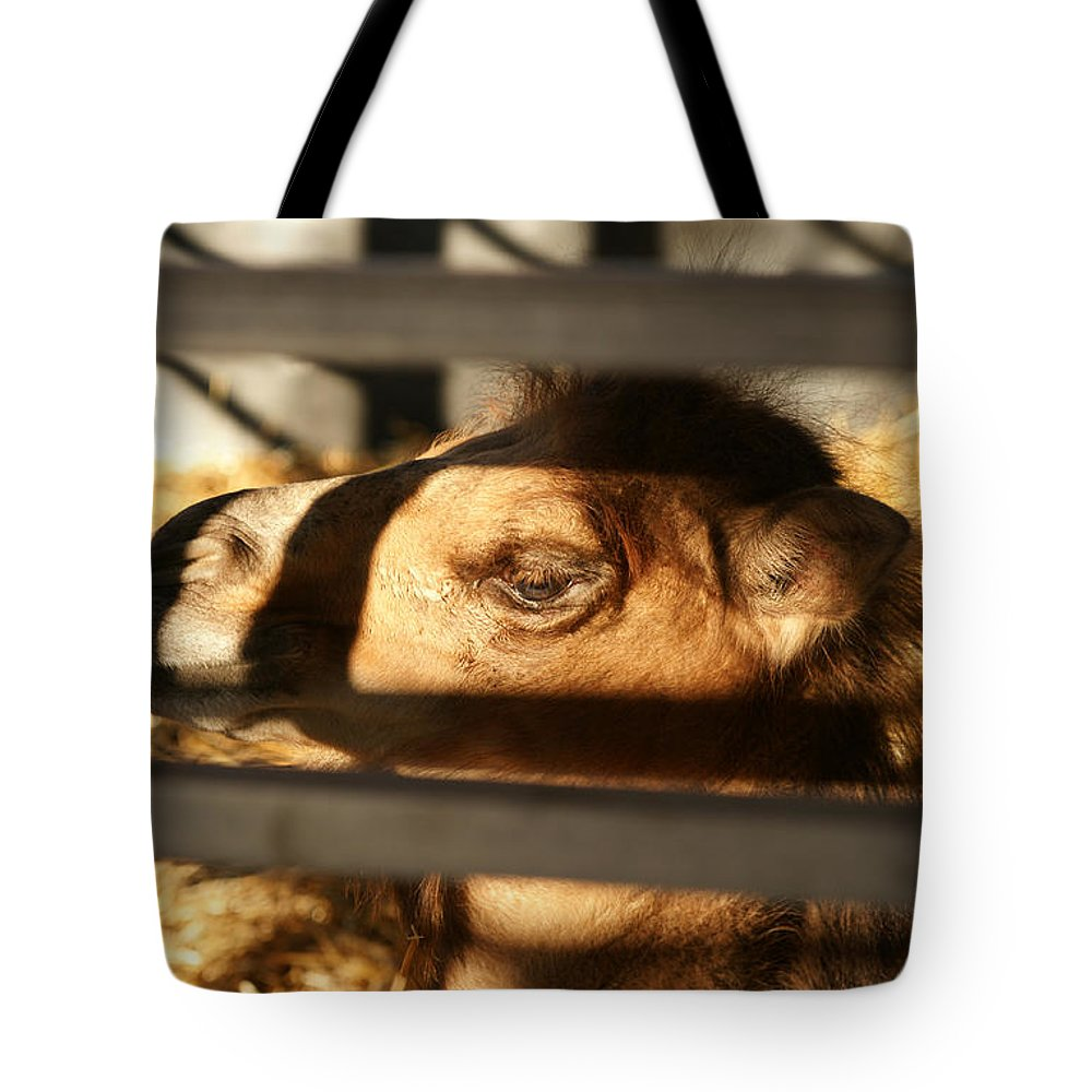 Camel Tote Bag featuring the photograph Lines And Shadows by Linda Shafer