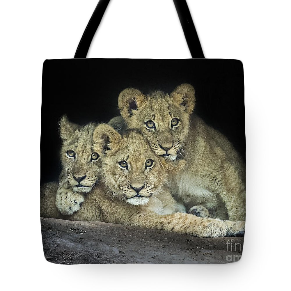 Cute Tote Bag featuring the photograph Three Lion Cubs by Linda D Lester