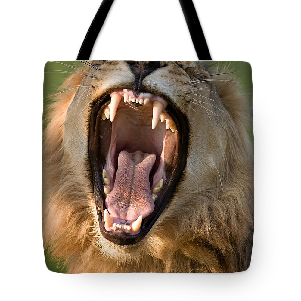 South Tote Bag featuring the photograph Lion by Johan Swanepoel