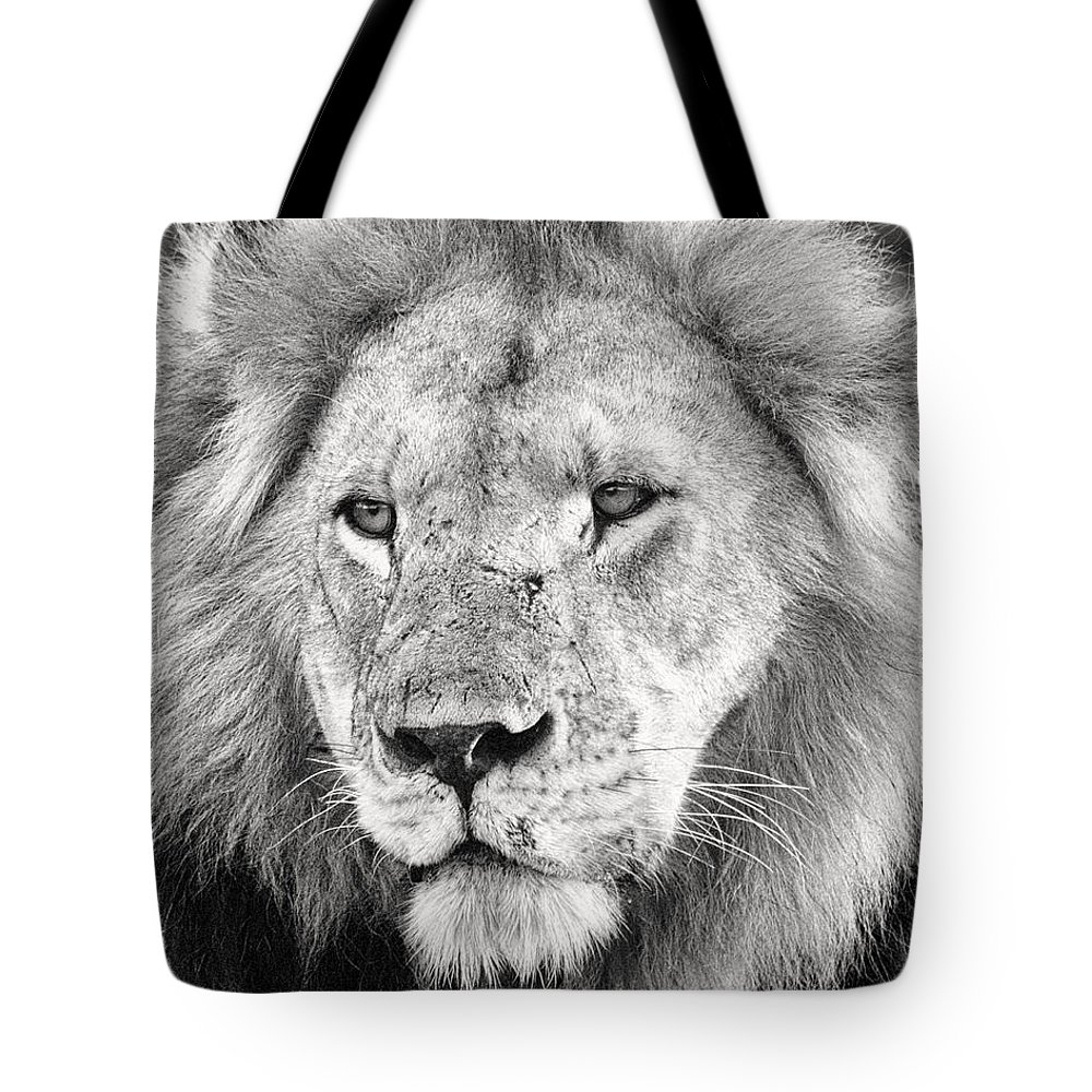 3scape Tote Bag featuring the photograph Lion King by Adam Romanowicz