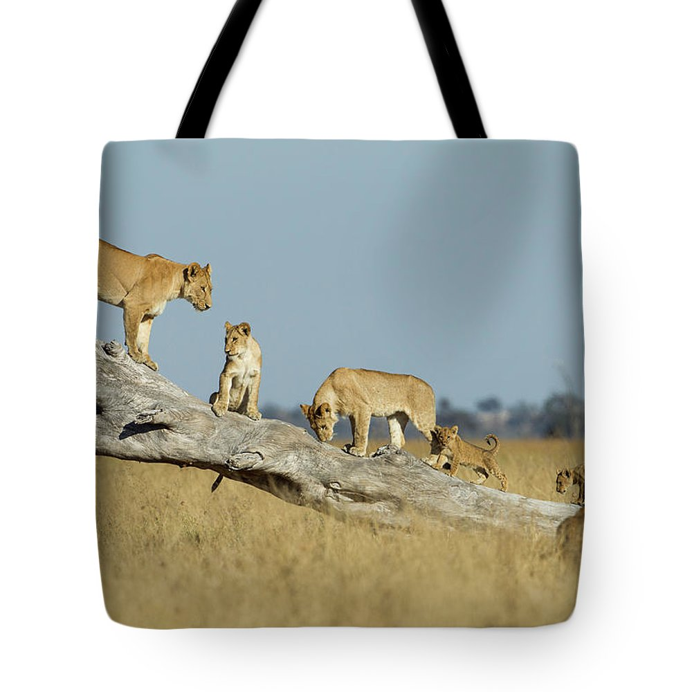 Pride Of Lions Tote Bag featuring the photograph Lioness And Cubs Standing On Dead Tree by WorldFoto