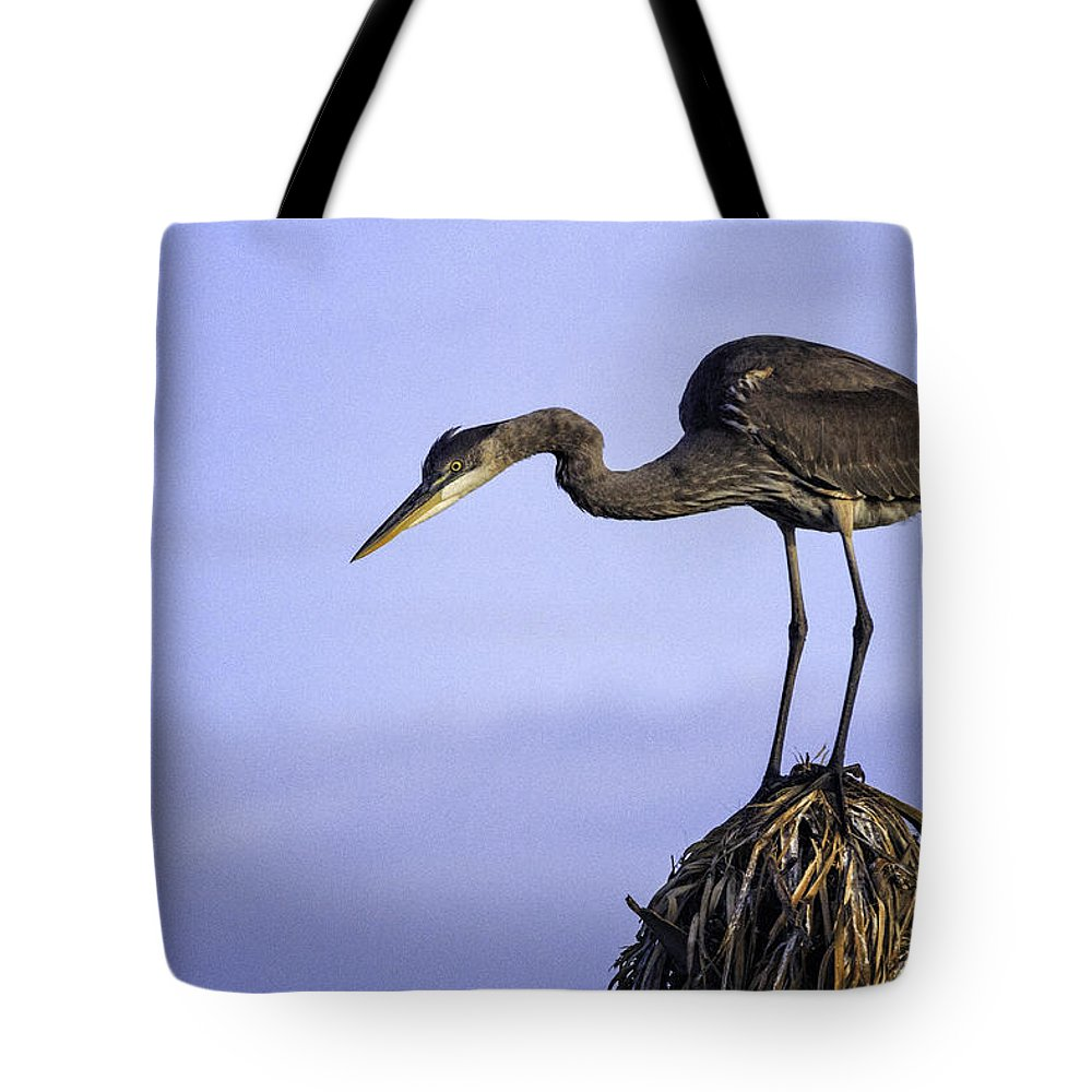 Bird Tote Bag featuring the photograph Little Blue Heron by Fran Gallogly
