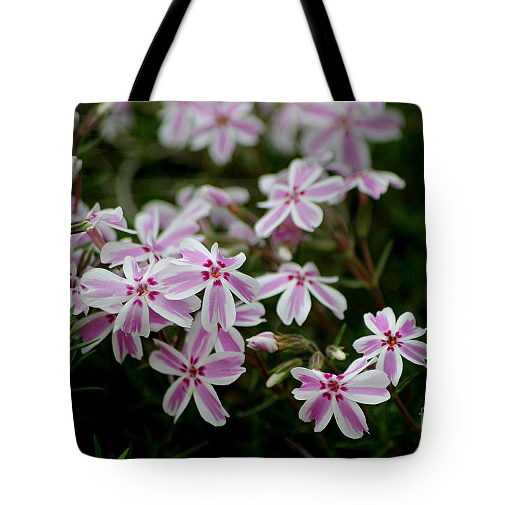 Candy Stripers Tote Bag featuring the photograph Little Candy Stripers by Living Color Photography Lorraine Lynch