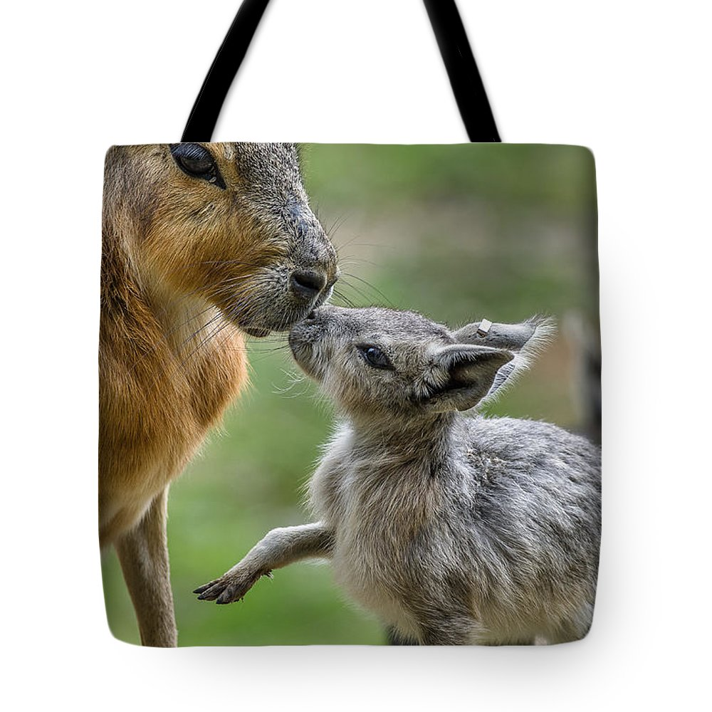 Patagonian Cavy Tote Bag featuring the photograph Little Cavy With Mother by Greg Nyquist