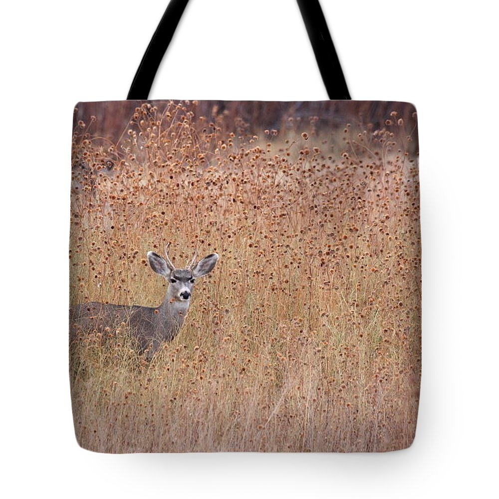 Buck Tote Bag featuring the photograph Little Deer by Ruth Jolly