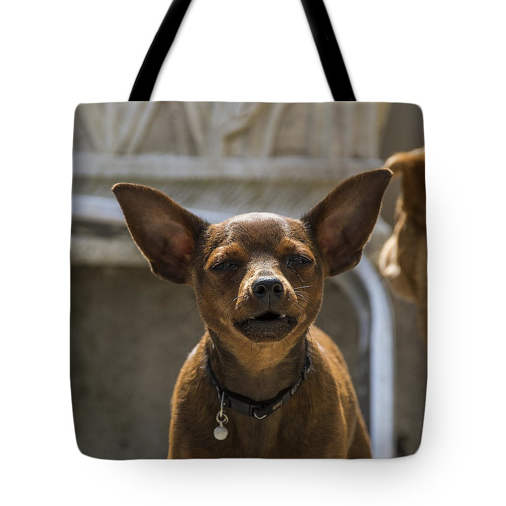 Animal Tote Bag featuring the photograph Little Dog by Paulo Goncalves