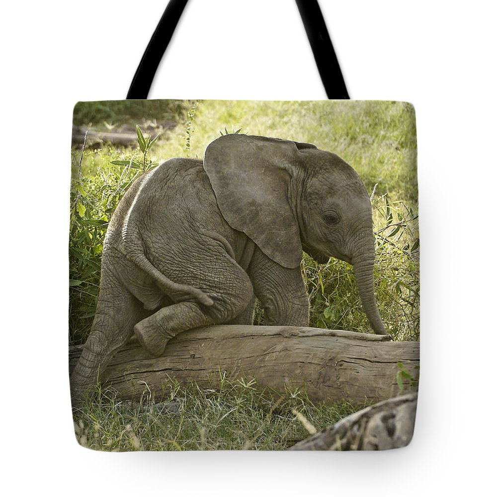 Africa Tote Bag featuring the photograph Little Elephant Big Log by Michele Burgess