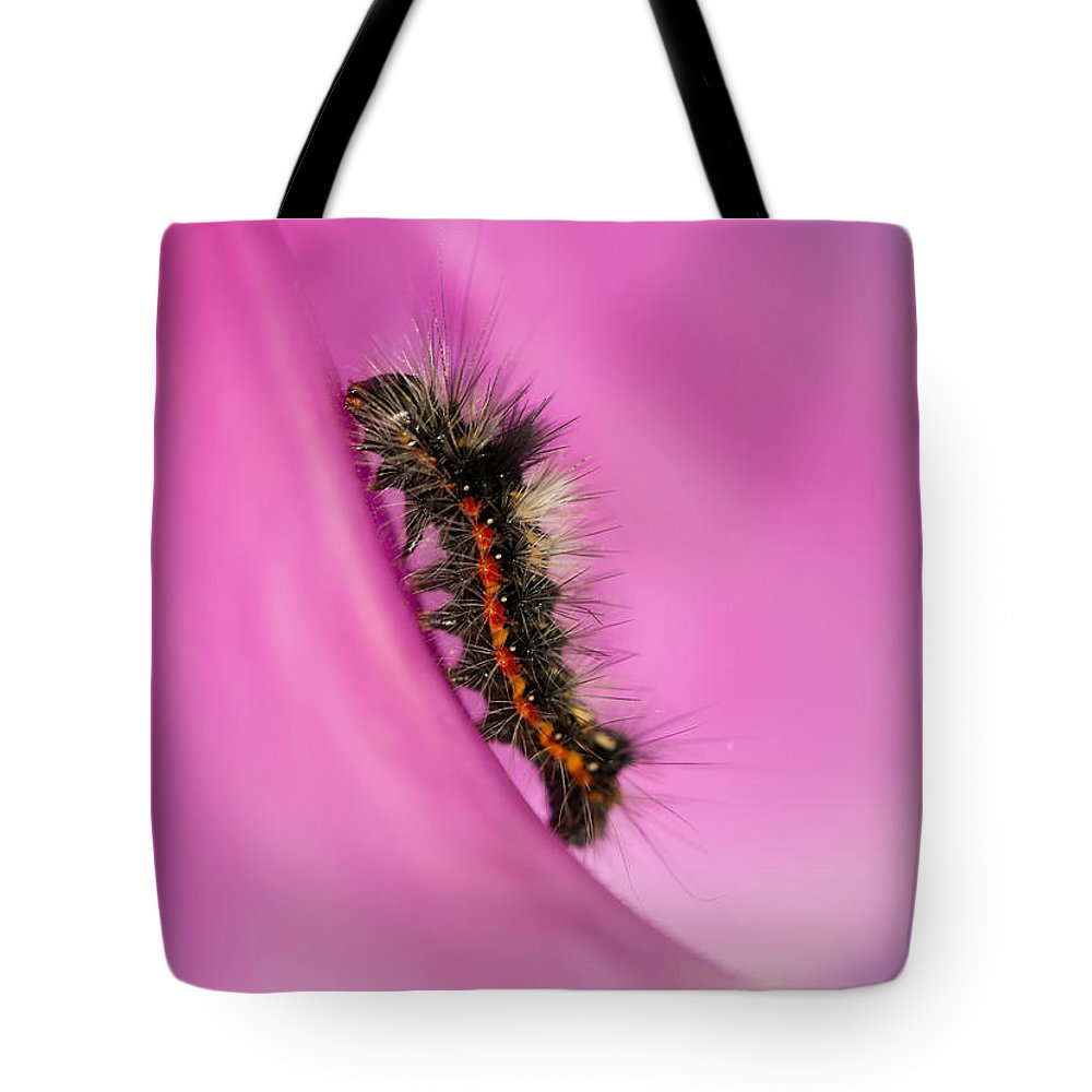 Macro Tote Bag featuring the photograph Little Furry Friend by Jaroslaw Blaminsky