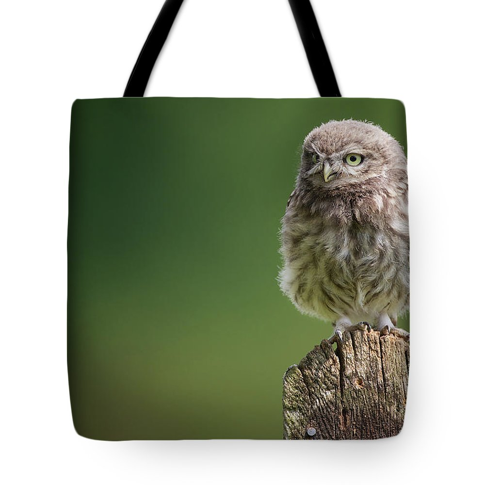 Owlet Tote Bag featuring the photograph Little Fuzzy by Markbridger