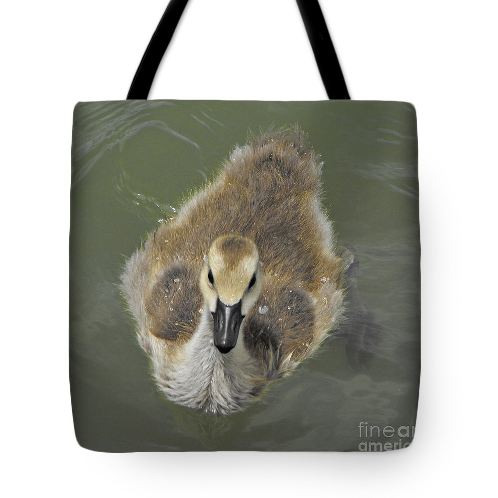 Duck Tote Bag featuring the photograph Little Guy by Brandi Maher