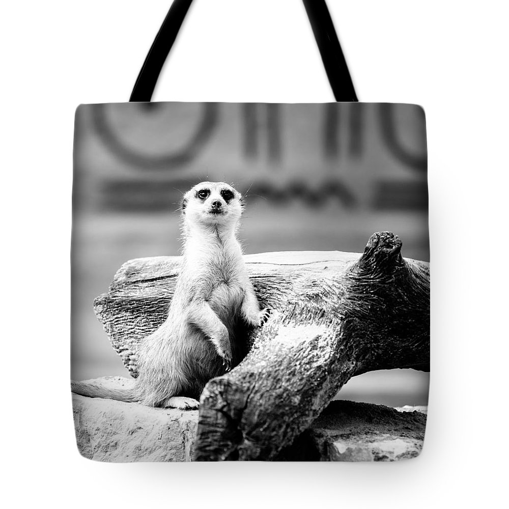 Black And White Tote Bag featuring the photograph Little Meerkat by Pati Photography