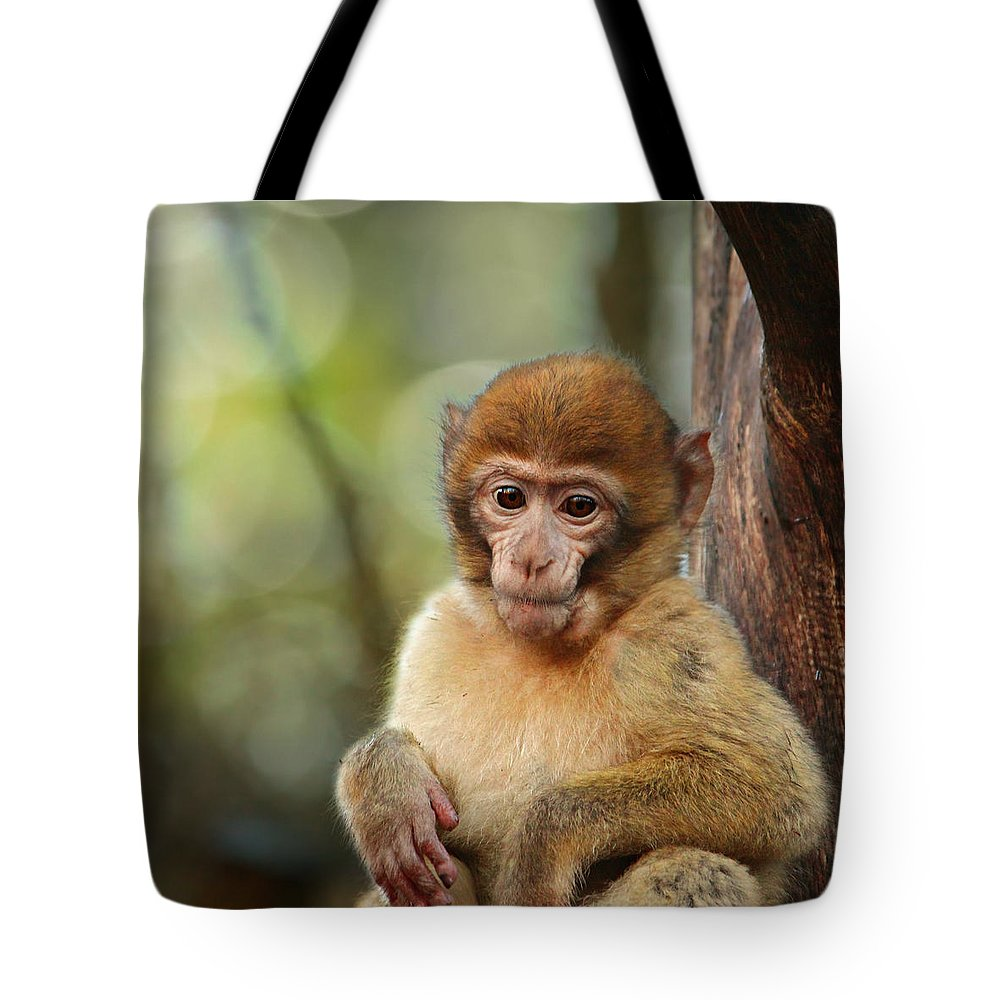 Monkey Tote Bag featuring the photograph Little Monkey by Heike Hultsch