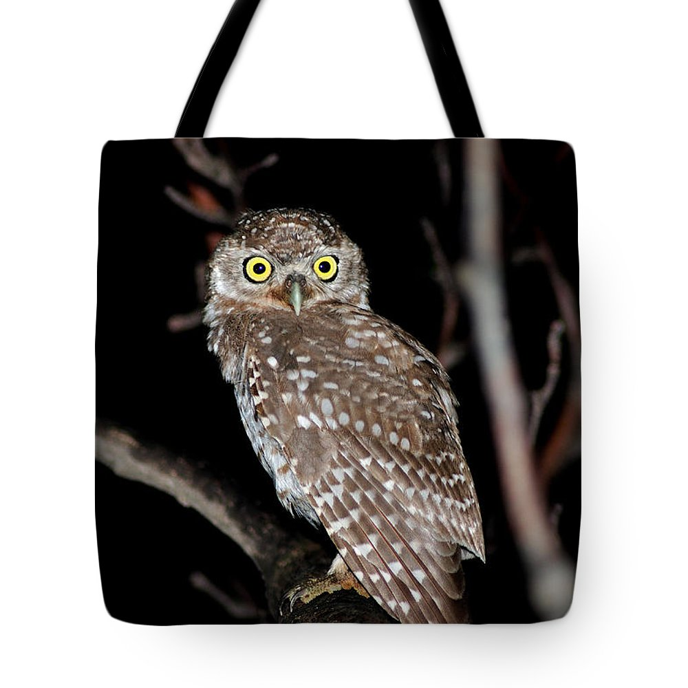 Bird Tote Bag featuring the photograph Little Owl Or Spotted Owlet by Manjot Singh Sachdeva