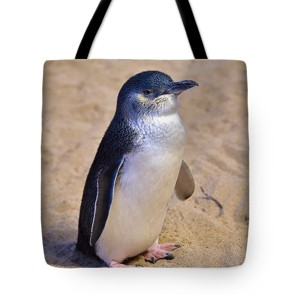 Nature Tote Bag featuring the photograph Little Penguin by Louise Heusinkveld