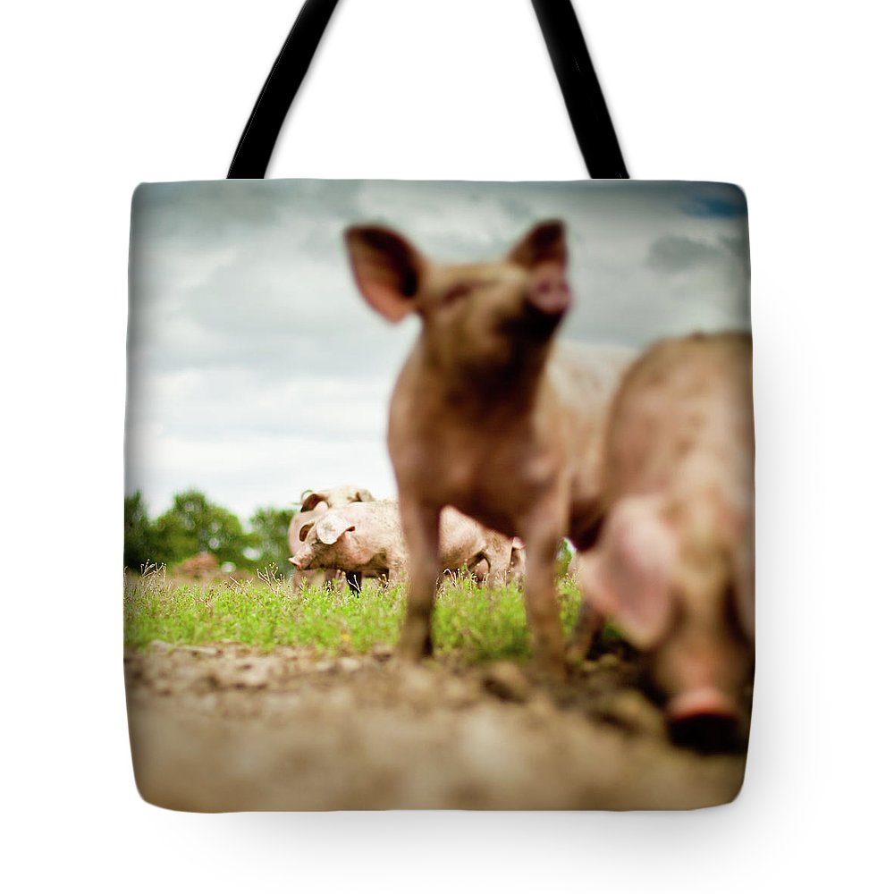 Pig Tote Bag featuring the photograph Little Pigs by Emmanuelle Brisson