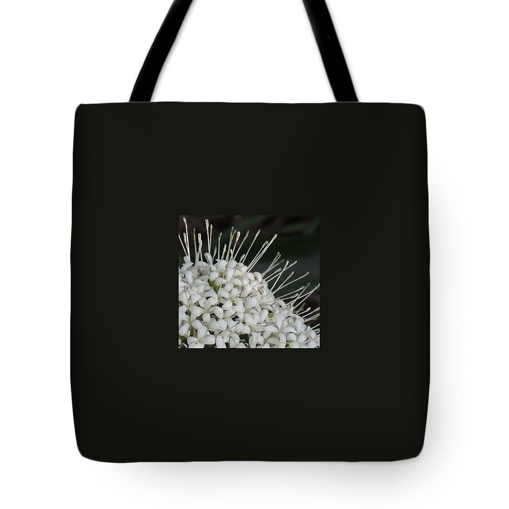 Macro Tote Bag featuring the photograph Little Ribbons by Denise Clark