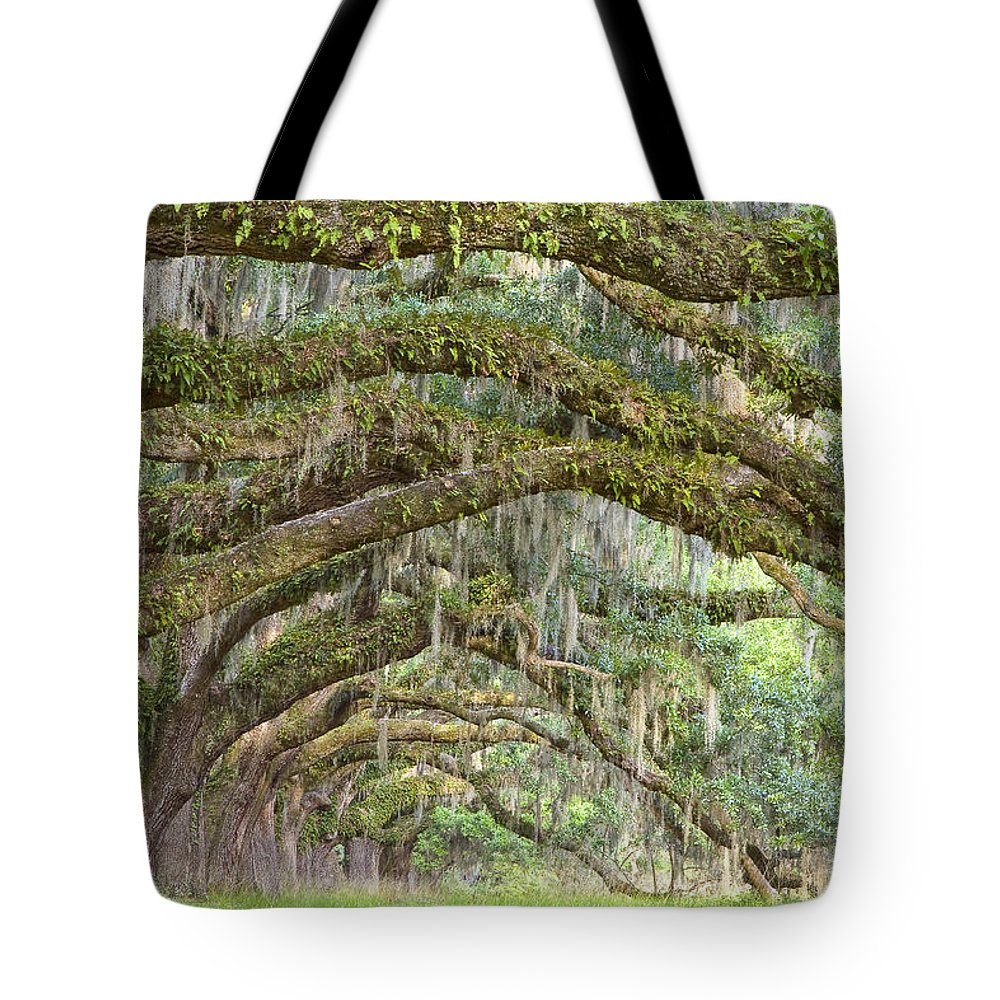 Live Oaks Tote Bag featuring the photograph Live Oaks by Bill Swindaman