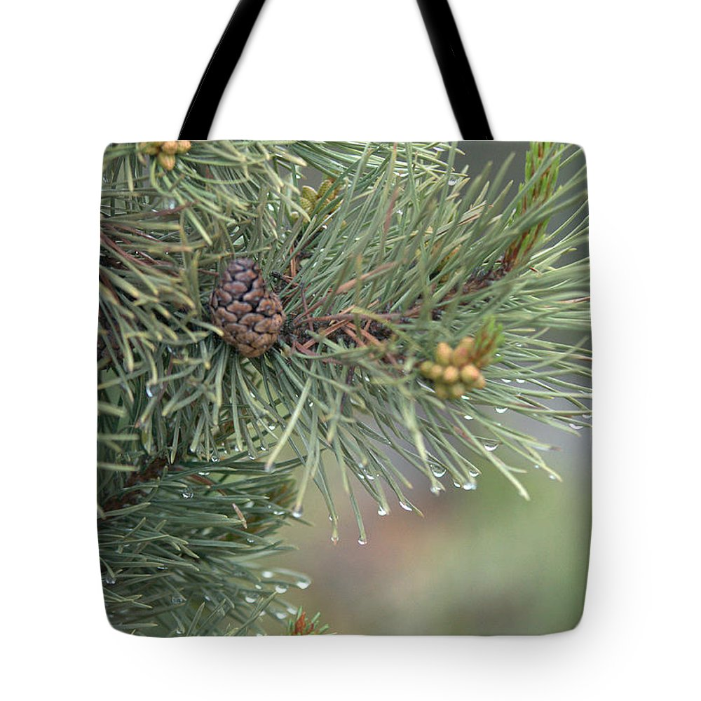 Pine Tote Bag featuring the photograph Lodge Pole Pine In The Fog by Frank Madia
