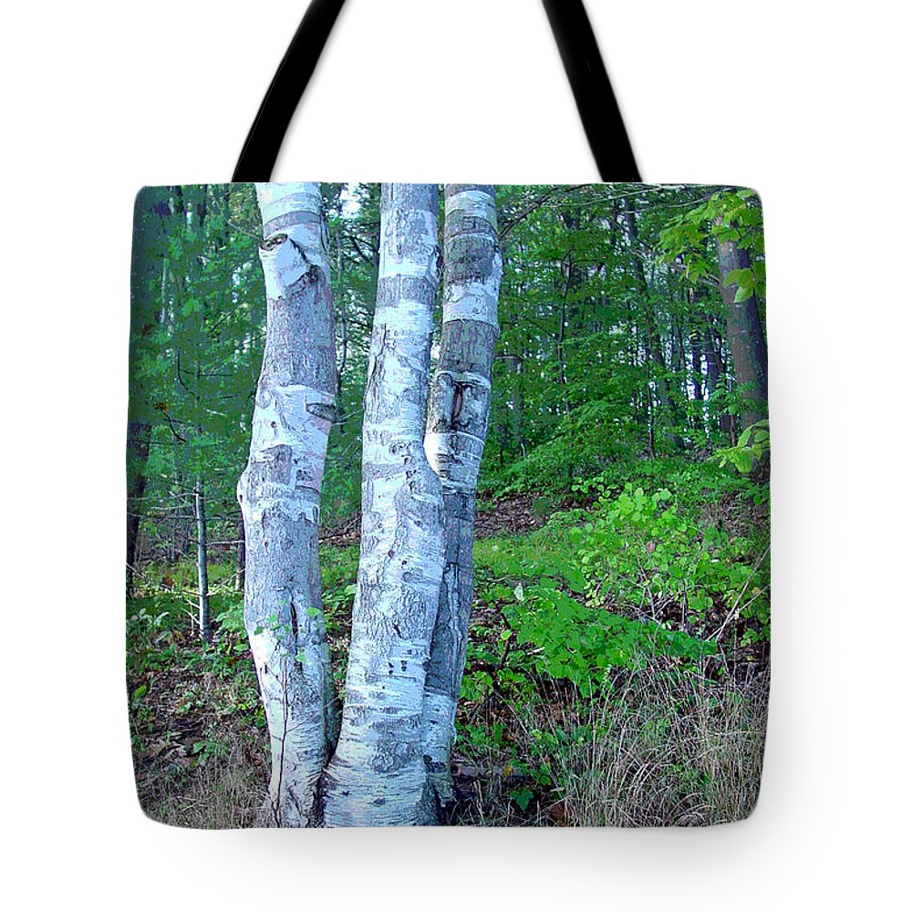 Birch Tree Tote Bag featuring the photograph Lone Birch in the Maine Woods by Suzanne Gaff