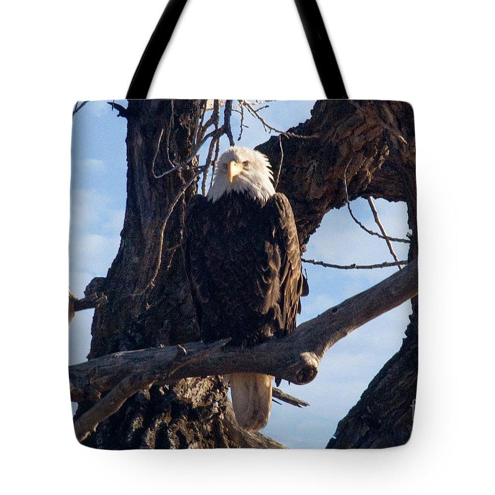 Colorado Tote Bag featuring the photograph Lone Eagle by Bob Hislop