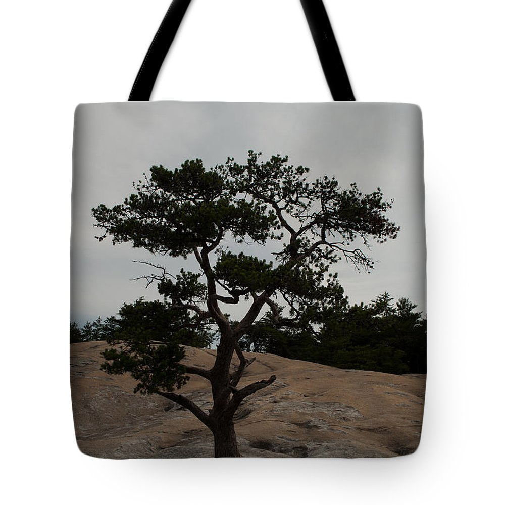 Stone Mountain Tote Bag featuring the photograph Lone Tree In Stone Mountain State Park North Carolina by Bruce Gourley