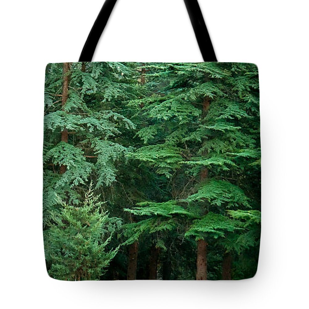 Grave Tote Bag featuring the photograph Lonely Graveyard Under Pine Trees by Leyla Ismet