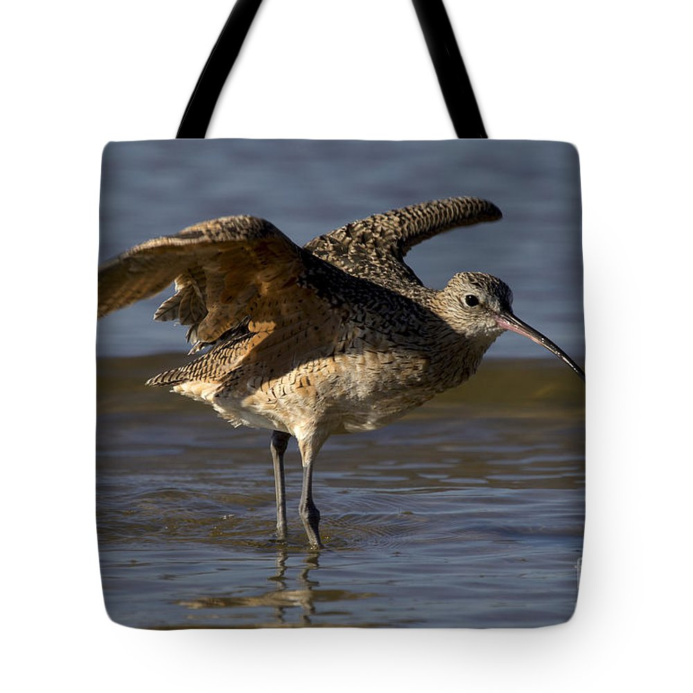 Bunche Beach Tote Bag featuring the photograph Long-billed Curlew by Meg Rousher