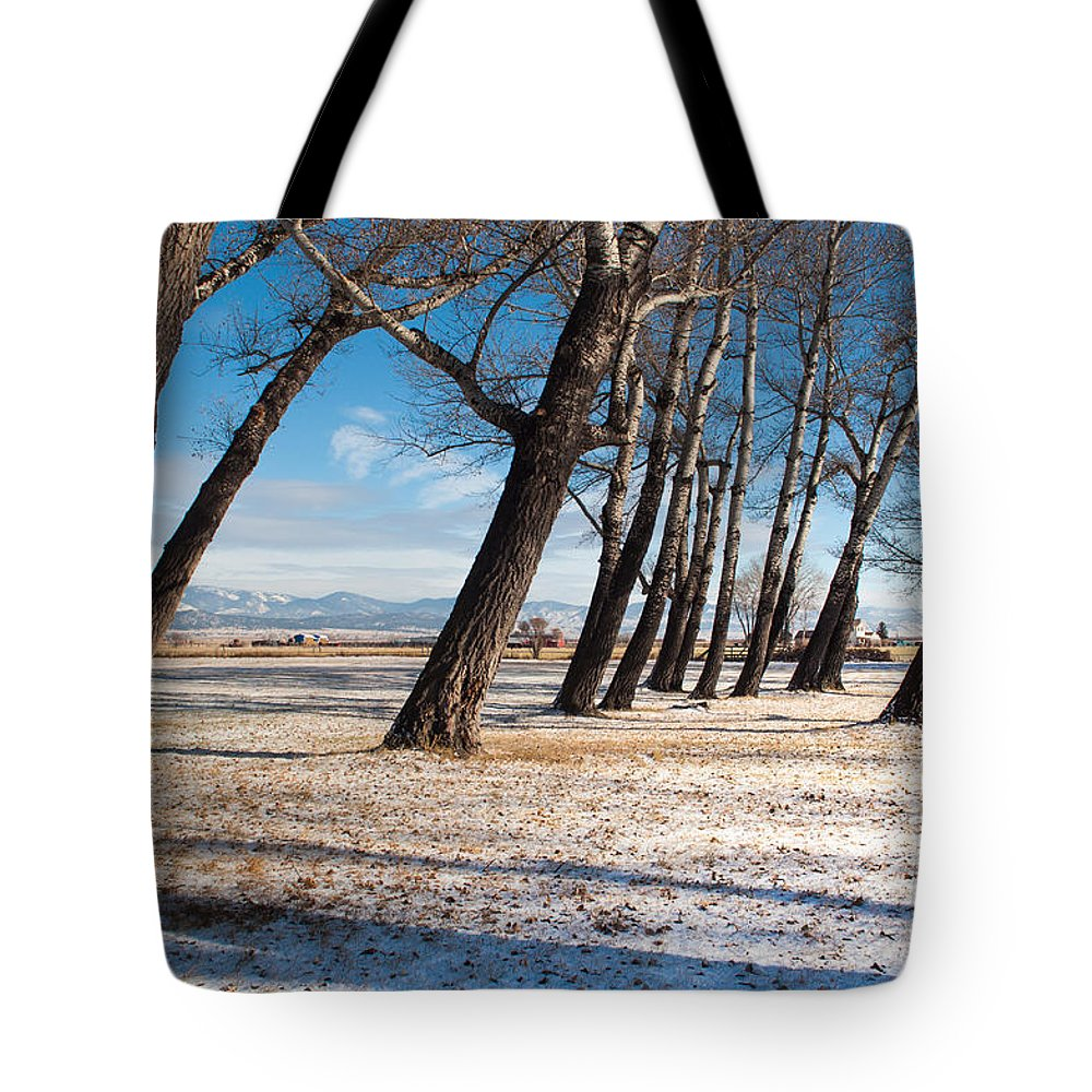 Trees Tote Bag featuring the photograph Long Shadows by Fran Riley