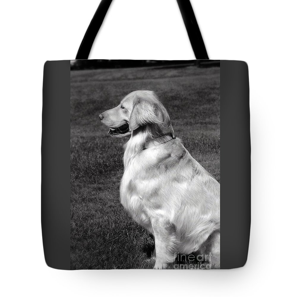 Frankjcasella Tote Bag featuring the photograph Looking Golden by Frank J Casella