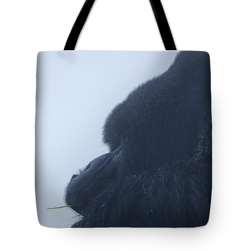 Rwanda Tote Bag featuring the photograph Looking Into The Mist by Paul Weaver