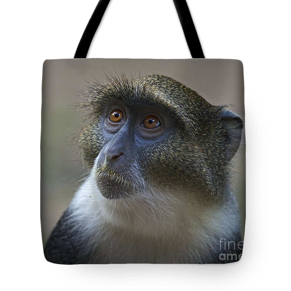 Festblues Tote Bag featuring the photograph Looking Up... by Nina Stavlund