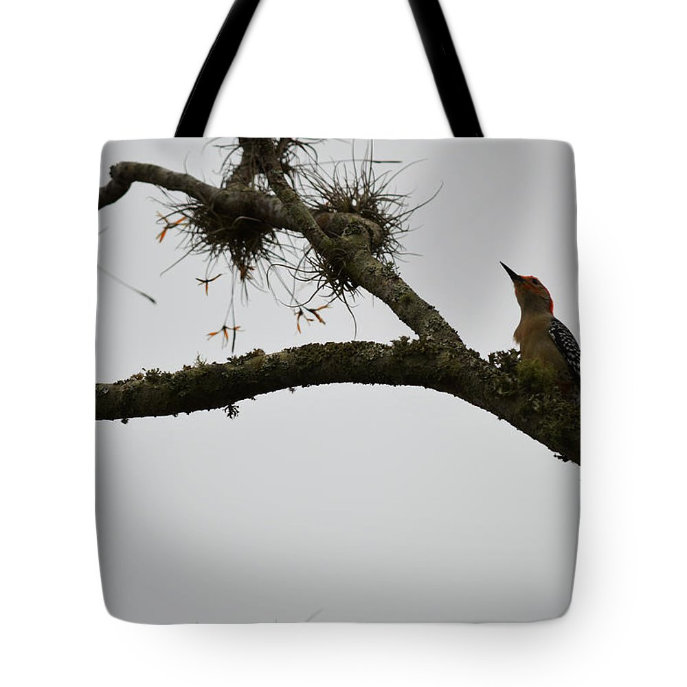 Florida Tote Bag featuring the photograph Lookup by Linda Kerkau