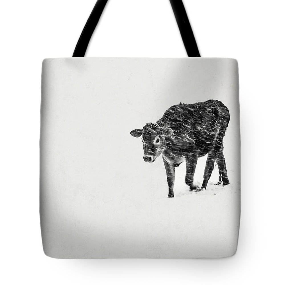 Calf Tote Bag featuring the photograph Lost Calf Struggling In A Snow Storm by Edward Fielding