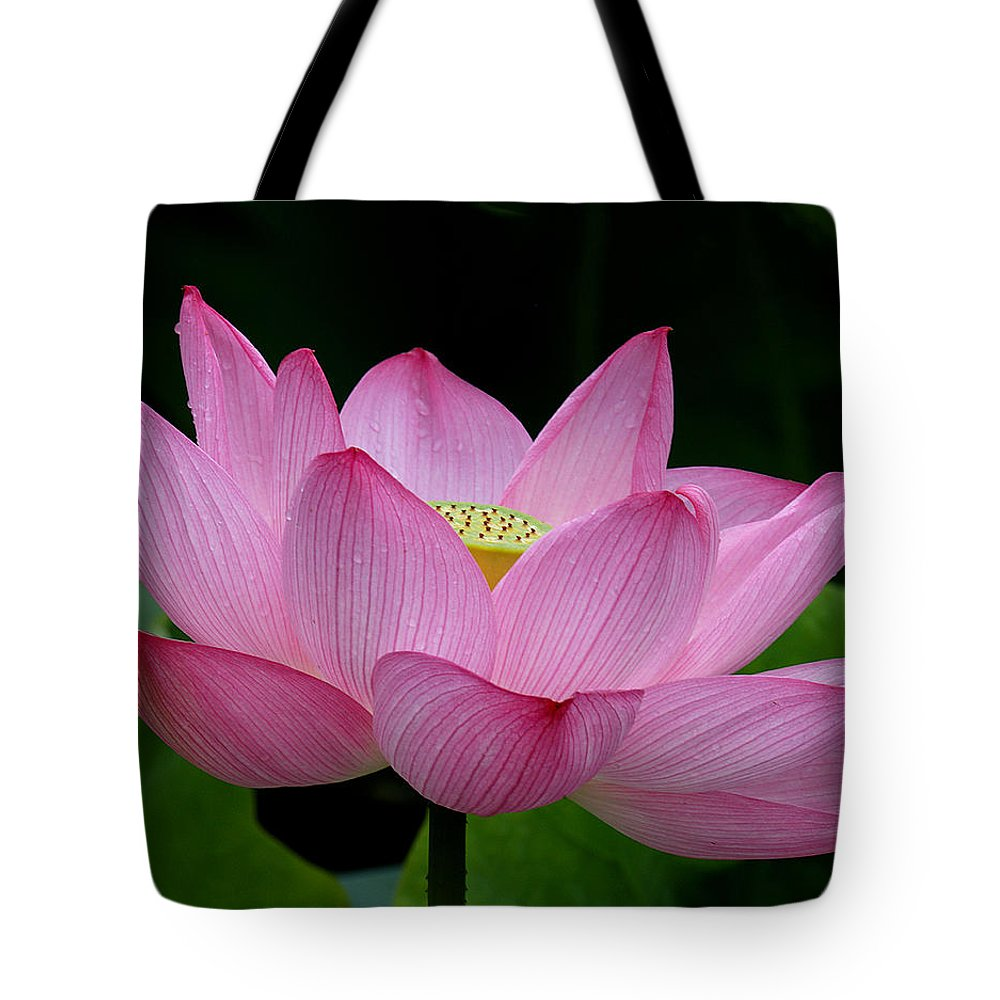 Lotus center of being iii dl033 tote bag for sale by gerry gantt nature tote bag featuring the photograph lotus center of being iii dl033 by gerry gantt izmirmasajfo