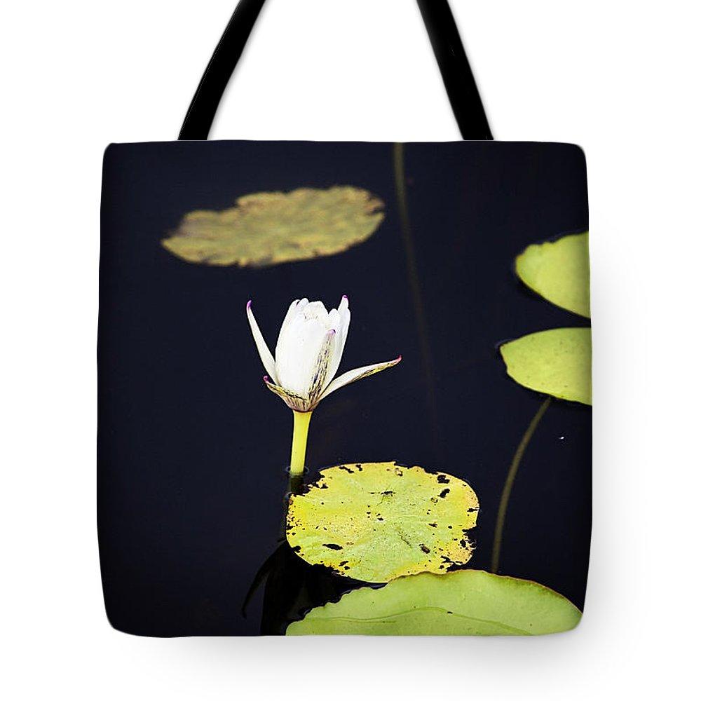 Lotus Flower Tote Bag featuring the photograph Lotus Flower- Gungarre Billabong V2 by Douglas Barnard