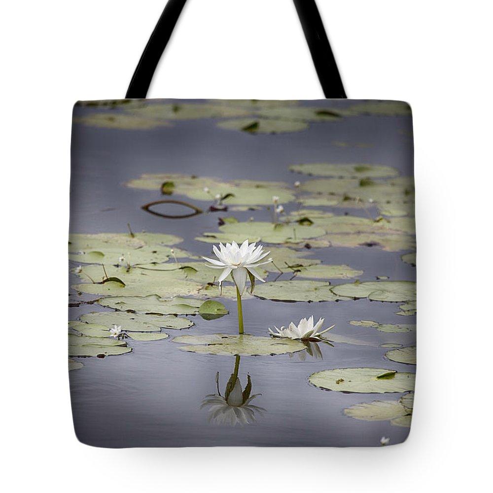 Lotus Flower Tote Bag featuring the photograph Lotus Flower- Gungarre Billabong V3 by Douglas Barnard