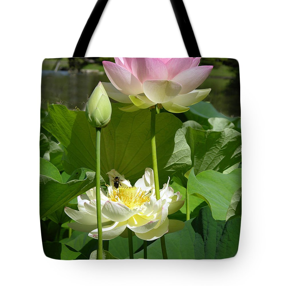 Lotus Tote Bag featuring the photograph Lotuses in Bloom by John Lautermilch