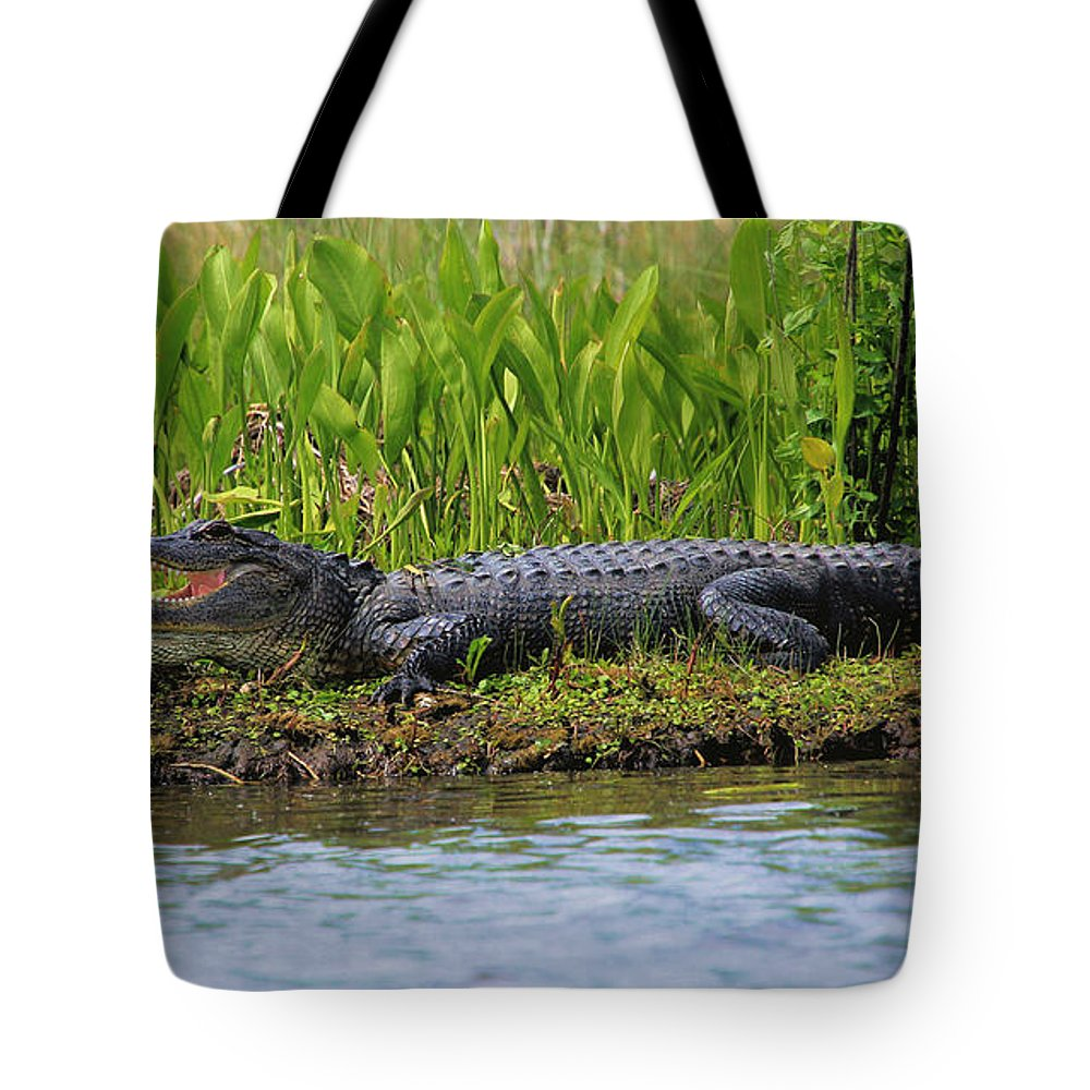 Gator Tote Bag featuring the photograph Louisiana Gator by Karry Degruise